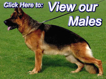 View-Males